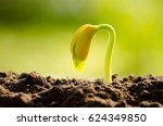 germinating seed grow over back ... | Shutterstock . vector #624349850