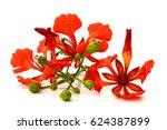 beautiful red delonix regia... | Shutterstock . vector #624387899