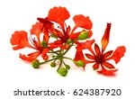 beautiful red delonix regia... | Shutterstock . vector #624387920