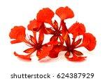 beautiful red delonix regia... | Shutterstock . vector #624387929