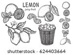 vintage lemon tree sketch.... | Shutterstock .eps vector #624403664