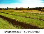 plantation | Shutterstock . vector #624408980
