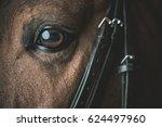 sporthorse eye closeup photo....