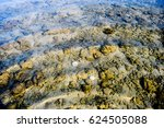 coral under the sea | Shutterstock . vector #624505088