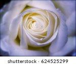 Stock photo white rose 624525299