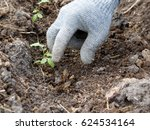A Gloved Hand Catches The Mole...