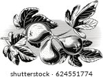 branch with three ripe figs. | Shutterstock .eps vector #624551774