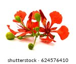 beautiful red delonix regia... | Shutterstock . vector #624576410