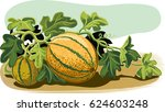 plant melons with some ripe... | Shutterstock .eps vector #624603248