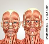 3d male and female face anatomy ... | Shutterstock . vector #624657284