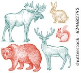 Forest Animals Set. Hand...