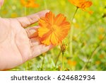 hand of woman holding yellow... | Shutterstock . vector #624682934