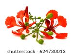 royal poinciana or delonix... | Shutterstock . vector #624730013