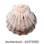 Composition Of Exotic Shells...