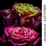 Floral Rose Macro Portrait Of ...
