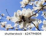 beautiful white flowers on... | Shutterstock . vector #624794804