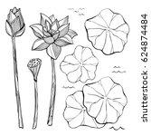 vector sketch set of flowers... | Shutterstock .eps vector #624874484