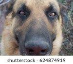 german shepherd | Shutterstock . vector #624874919