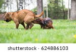 dog smells a dog in heat | Shutterstock . vector #624886103
