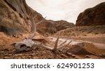 Animal Skull In Desert Canyon