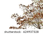 Detail Of Tree Isolated On...