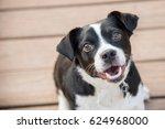 Stock photo black and white dog smiling 624968000