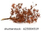 branch tree leaf dry with space ... | Shutterstock . vector #625004519