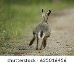 Stock photo hare 625016456