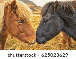 two icelandic horses nuzzle | Shutterstock . vector #625023629