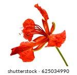 beautiful red delonix regia... | Shutterstock . vector #625034990