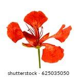 beautiful red delonix regia... | Shutterstock . vector #625035050