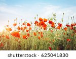 Close up poppies on field. wild ...