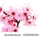 may flowers | Shutterstock . vector #625046534