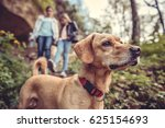 Stock photo small yellow dog on a forest trail with a people walking in the background 625154693