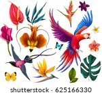 set with exotic birds and... | Shutterstock . vector #625166330