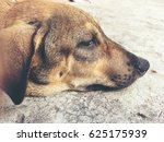 dog sleeping   homeless stray... | Shutterstock . vector #625175939