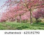japanese cherry blossoms... | Shutterstock . vector #625192790