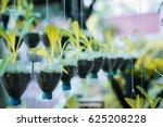 bottle pot hanging form tree...   Shutterstock . vector #625208228