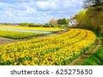 Spring Tulip Farm Landscape....