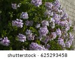 A Beautiful Abundant Blooming...