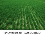 farm field with lush green... | Shutterstock . vector #625305830