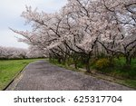 full bloom of cherry blossom... | Shutterstock . vector #625317704