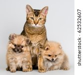 Cat And The Puppies Of The...