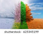 Four season tree magical  nature