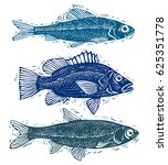 set of fishes  different... | Shutterstock . vector #625351778