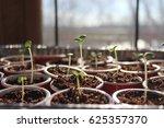 seed starting in spring. fresh... | Shutterstock . vector #625357370