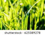 water drops on grass in green... | Shutterstock . vector #625389278