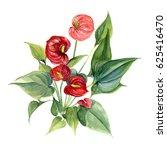 Anthurium. Watercolor Hand...