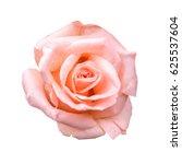 Stock photo pink roses isolated on white background 625537604