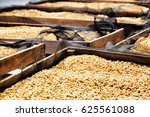 fresh crop of coffee beans... | Shutterstock . vector #625561088